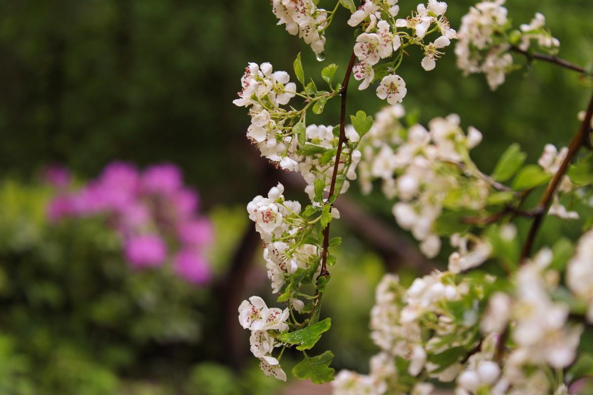 impact sessie bloemen